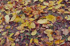Folhas de outono na terra Imagem de Stock