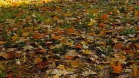 Folhas de outono na terra vídeos de arquivo