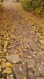 Folhas de outono na terra fotos de stock