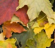 Folhas de outono na terra Fotos de Stock Royalty Free