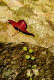Folhas de outono na terra Imagens de Stock