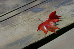 Folhas de outono na terra Fotografia de Stock
