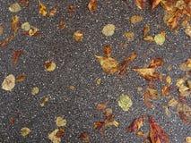 Folhas de outono no asfalto imagem de stock royalty free