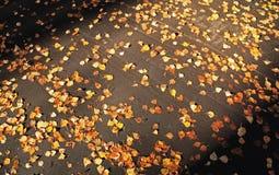 Folhas de outono no asfalto Fotos de Stock Royalty Free
