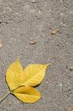 Folhas de outono no asfalto Imagens de Stock Royalty Free