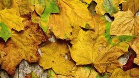 Folhas de outono no assoalho de madeira velho vídeos de arquivo