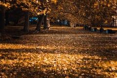 Folhas de outono no banco sob a árvore de bordo amarela no parque Fotografia de Stock
