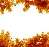 Folhas de outono no branco fotos de stock royalty free