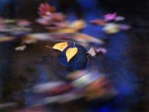 Folhas de outono no córrego Fotos de Stock Royalty Free