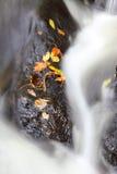 Folhas de outono no córrego de fluxo Fotos de Stock Royalty Free