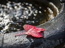 Folhas de outono no dissipador da ?gua imagens de stock