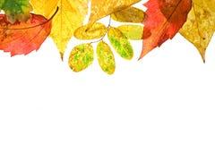 Folhas de outono no fundo branco Imagem de Stock Royalty Free