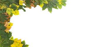 Folhas de outono no fundo branco Fotos de Stock Royalty Free