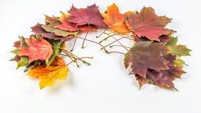 Folhas de outono no fundo branco Imagens de Stock Royalty Free