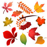 Folhas de outono no fundo branco Ilustração do vetor Fotos de Stock Royalty Free