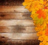 folhas de outono no fundo de madeira do grunge velho Fotos de Stock