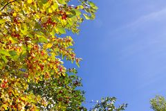 folhas de outono no fundo do céu azul Foto de Stock