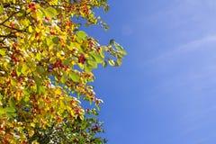 folhas de outono no fundo do céu azul Imagem de Stock