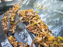 Folhas de outono no pára-brisas do carro Imagens de Stock