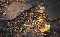 Folhas de outono no parque Fotografia de Stock