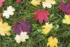 Folhas de outono no parque da cidade Foto de Stock Royalty Free