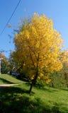 Folhas de outono no parque gorkiy Imagem de Stock Royalty Free