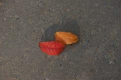 Folhas de outono no pavimento foto de stock