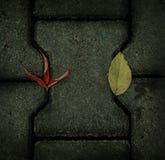 Folhas de outono no pavimento fotos de stock royalty free