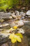 Folhas de outono no rio Fotos de Stock Royalty Free