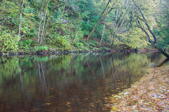 Folhas de outono no rio Ure Fotos de Stock Royalty Free