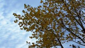 Folhas de outono no vento vídeos de arquivo