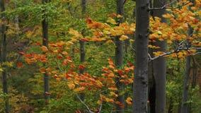 Folhas de outono no vento tormentoso vídeos de arquivo