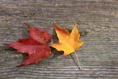 Folhas de outono originais imagem de stock
