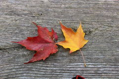 Folhas de outono originais fotografia de stock royalty free