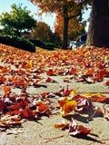 Folhas de outono, perspectiva da formiga Fotos de Stock