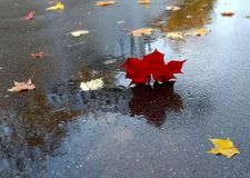 Folhas de outono que caem em uma poça fotografia de stock royalty free