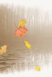 Folhas de outono que caem no lago foto de stock