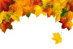 Folhas de outono que constroem uma beira curvar-dada forma Imagens de Stock