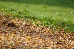 Folhas de outono que contrastam com grama Foto de Stock