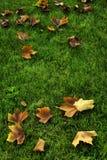 Folhas de outono que encontram-se na grama Imagens de Stock Royalty Free