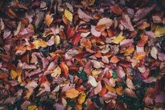 Folhas de outono que encontram-se na terra Imagem de Stock Royalty Free