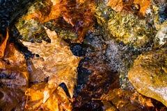 Folhas de outono que flutuam sobre um córrego Imagem de Stock