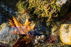 Folhas de outono que flutuam sobre um córrego Fotografia de Stock
