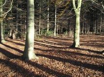 Folhas de outono (a queda) Imagens de Stock Royalty Free