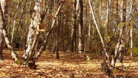 Folhas de outono de queda coloridas na floresta arborizada 1920x1080 filme