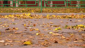 Folhas de outono de queda que fundem o vento no trajeto no parque no fundo da cerca vídeos de arquivo