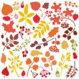 Folhas de outono, ramos, grupo de bagas Silhueta da queda Fotografia de Stock Royalty Free