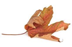 Folhas de outono secadas foto de stock royalty free