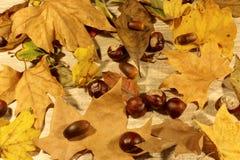Folhas de outono secas Foto de Stock Royalty Free