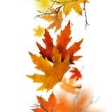 Folhas de outono secas que caem do ar Imagem de Stock